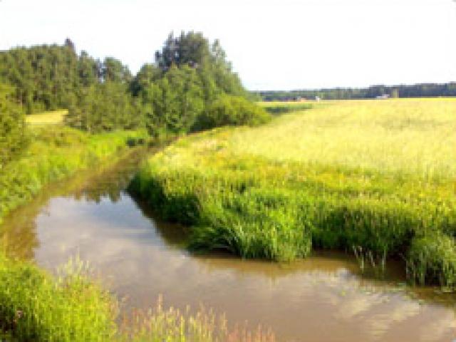 Niinijoki